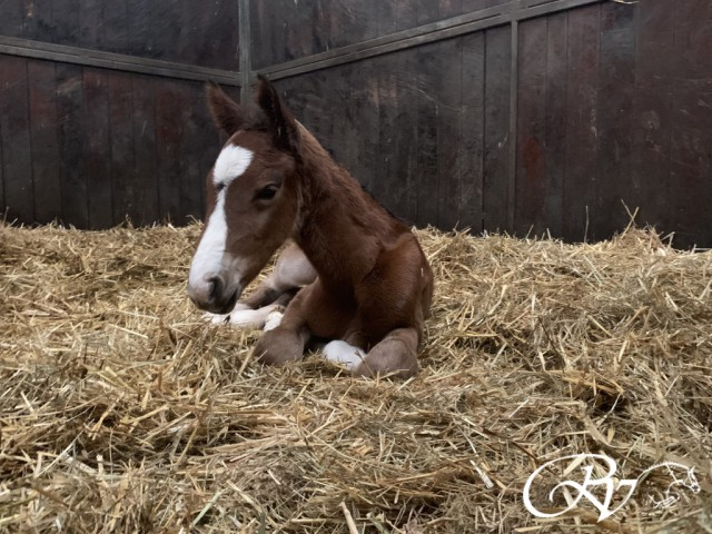 First foal of the year is born!