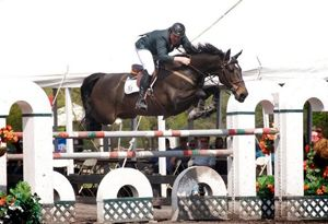 Sir RV (Burggraaf x Nimmerdor) Grand Prix jumping horse with rider Peter John Gisborn.