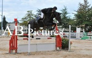 Brainstormer RV (Argentinus x Voltaire) jumping CSI 1.30m classes with amazon Cyrille Curvat.