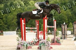 Wayne RV (Karandasj x Emilion) jumping on Grand Prix level with rider Jimmy Torano.