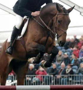 Wacantos RV (Cantos x Nimmerdor) International 1.45m horse with rider Marc Houtzager.