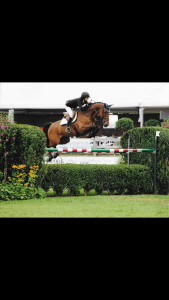 What ever RV (Murano x Amethist) jumping 1.50m with rider Jur Vrieling and Jeffrey Welles and Champion of the USA young riders 1.45m level with amazon Dana Scott in 2012.