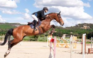 Acorde RV (Concorde x Nimmerdor) international 1.40m classes with rider Guillaume Comte.
