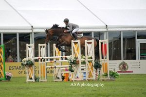 Zantiago RV (Burggraaf x Wolfgang) International 1.40m horse with amazon Morgan Kent.