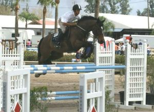 Nike RV (Guidam x Nimmderdor) International 1.40m horse, owner Winley Farm.