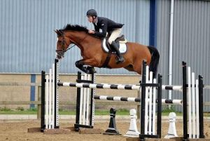 Benetton RV (Lord Z x Voltaire) jumping International 1.35m classes with rider Chris Franks.