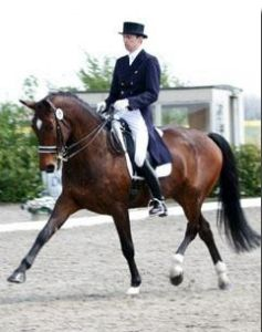Renegade RV (Iroko x Makelaar) Grand prix dressage horse with rider Reth Bird.